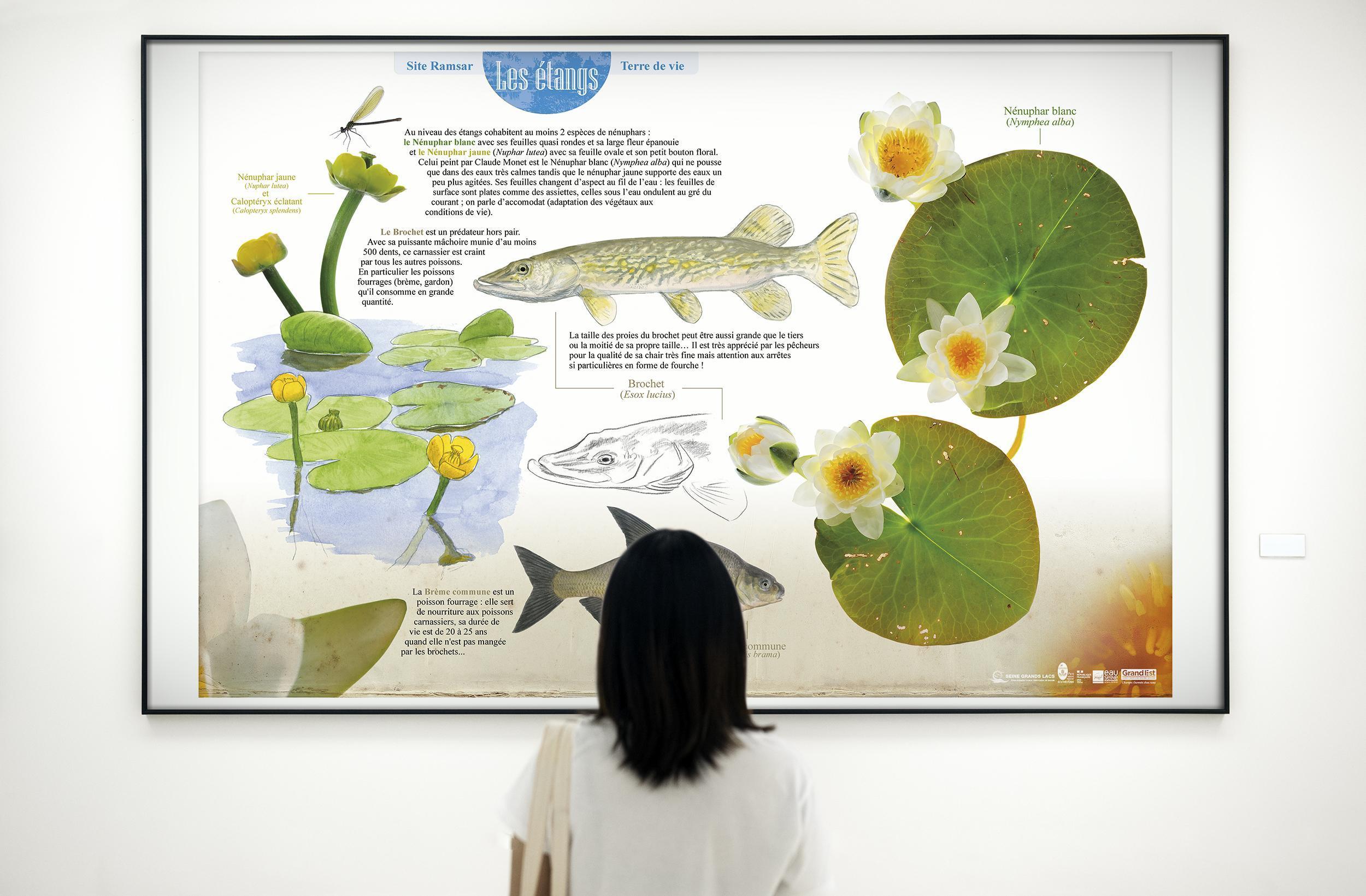 "Exposition virtuelle - Zone Ramsar ""Étangs de Champagne humide"""