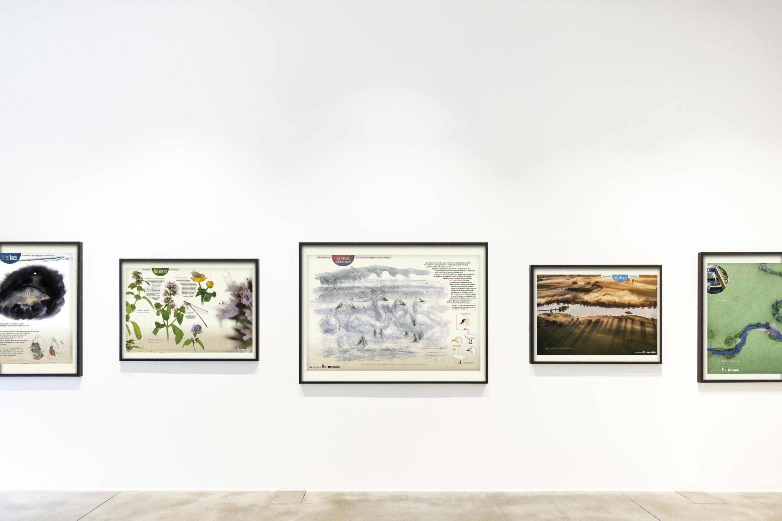 "Exposition virtuelle ""Zone Ramsar, étangs de Champagne humide"""